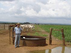 Mais gado por área com o sistema de integração lavoura pecuária