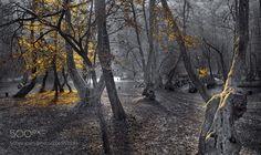 Forest by SejmenovicMevludin #Landscapes #Landscapephotography #Nature #Travel #photography #pictureoftheday #photooftheday #photooftheweek #trending #trendingnow #picoftheday #picoftheweek