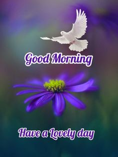 Good Morning Thursday Images, Cute Good Morning, Good Morning Picture, Morning Pictures, Good Morning Quotes, Memories Quotes, Night, Gud Morning Images, Be Nice