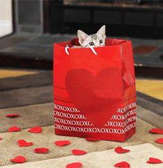 Love in a bag OR I guess the cat's out of the bag.