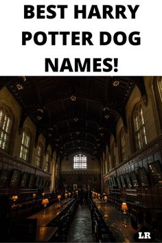 Do you have a new puppy? Or do you just want to look at famous magical names? We have a huge list of Harry Potter names for your dog. #List #Puppys #Cute #Boy #2020 #2019 #Unisex #Short #White #Husky #Food #Military #Nature #Little #Boho #BerneseMountain #Greek #List #Popular #Golden Retriever #Cutest #French #Rare #Rustic #Lab