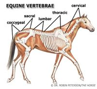 Burlington Equine Veterinary Services, LLC