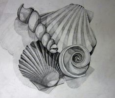 My teacher example for Value Study Shells Still Life. 8th Grade Lesson. Brookland Middle School