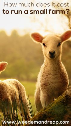 How much does it cost to run a small farm? #farm #homestead #country #animals #budget