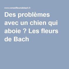 Des problèmes avec un chien qui aboie ? Les fleurs de Bach !