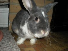 cute just pure cute Rabbit, Pure Products, Rock, Cute, Animals, Bunny, Rabbits, Animales, Animaux