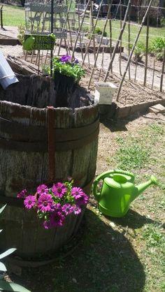 Rain barrel with plants