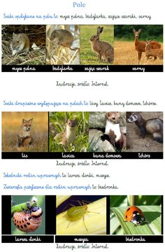 Preschool Activities, Education, Nature, Blog, Animals, Zoology, Geography, Montessori Activities, Projects