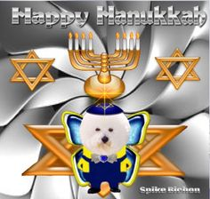 Happy Hanukkah 🔯🕎 #hanukkah #spikebichon