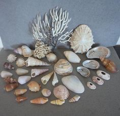 Buy Sea Shells & rare White grass from Jeffreys Bay (cleaned handpicked) for R29.00