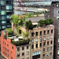 Rooftop gardens, urban renewal, sustainability
