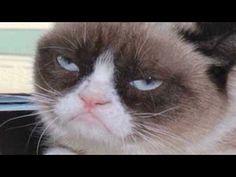 Grumpy Cat goes from meme to the big screen. Grumpy Cat video #GrumpyCat