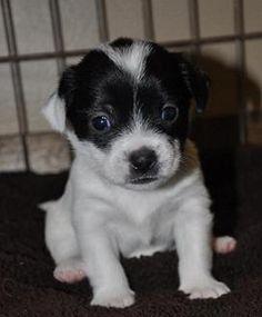 BonBon has been adopted!