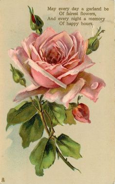 Pink rose & buds.  Poem: May every day a garland be of fairest flowers, and every night a memory of happy hours.