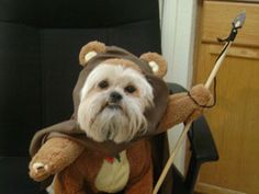 Halloween Pet Costumes - Contest for the Best Halloween Pet Costumes - Good Housekeeping & 239 best Cute Pet Costumes images on Pinterest | Doggies Mascot ...