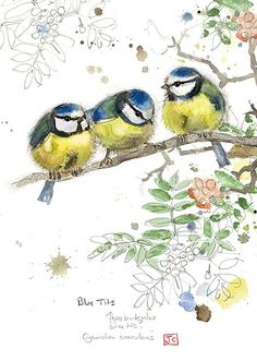 Blue Tits by Jane Crowther for Bug Art greeting cards.