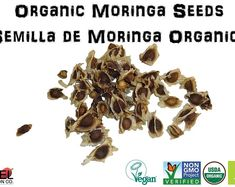 Drumstick Tree Moringa oleifera Seeds Sacred Herbs and | Etsy Bike Storage Solutions, Wish You Well, Moringa Oil, Stuffed Shells, Marketing Plan, Clean Recipes, Food Grade, Herbalism, The Cure