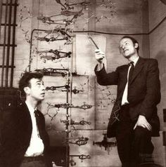 James Watson and Francis Crick with a model of the DNA molecule, the double helix. Nucleic Acid Structure, X Ray Crystallography, James Watson, Dna Molecule, Calendar Pictures, King's College London, Biology Lessons, Structure And Function, Chemical Structure