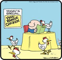 Ziggy  (Apr/27/2015) Chicken Jokes, Funny Chicken, Funny Toons, Tom Wilson, Animal Activities, Friday Humor, Calvin And Hobbes, Fun Comics, Sarcastic Humor
