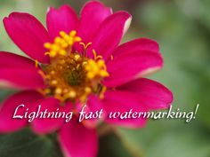 Photoshop action: Sizing, sharpening and watermarking for web