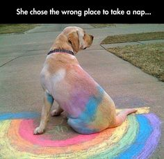 funny yellow labs, little puppies, labrador puppy funny, funny dogs, rainbow labrador, labrador funny, place, labs funny, black labs