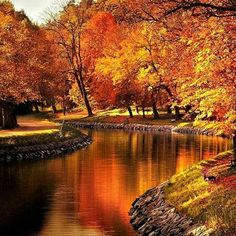 Golden Autumn.