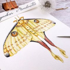 Videos, Illustration, Animals, Instagram, Art Print, Animales, Animaux, Illustrations, Animal Memes