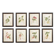 Brighten up a plain wall by hanging a colourful picture or two. Based on original illustrations, our set of eight botanical prints depicting exotic fruits come mounted, glazed and framed in distressed, black painted, wooden frames. Group them together on a wall to create an installation with real impact.