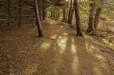 Manuals River trail #newfoundland #nature #photography