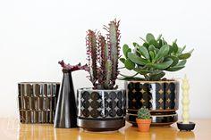 Urban Jungle Bloggers: the #plantshelfie by Oravanpesä