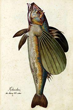 Vintage Print, Flying Fish
