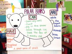 The Creative Colorful Classroom: Informational Writing chart about Polar Bears Bears Preschool, Preschool Activities, Winter Activities, Preschool Winter, Artic Animals, Penguins And Polar Bears, Informational Writing, Nonfiction, Writing Anchor Charts