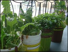 Self Watering containers for gardening in small spaces... like my balcony!!  This guy has a whole website dedicated to small space gardening in places like balconies and fire escapes in the city!