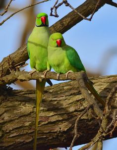 Bird couple #photographytalk #wildlife