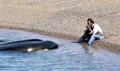 La curiosidad de las ballenas Chubut Argentina