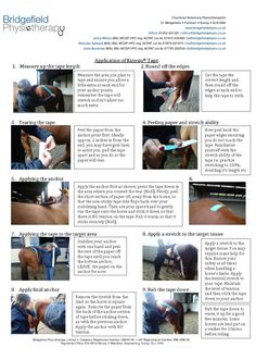 How to tape a horse? Check it out #HorseTaping #HorseCare #KinesioTape…