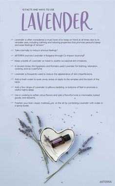 Lavender Essential Oil from doTERRA - Essential Oils Lavender Essential Oil Benefits, Lavender Oil Uses, Helichrysum Essential Oil, Essential Oils For Headaches, Doterra Essential Oils, Young Living Essential Oils, Essential Oil Blends, Lavender Benefits, Lavender Doterra