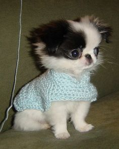 KoKo's new sweater - 3 mos. old by kikileta, via Flickr