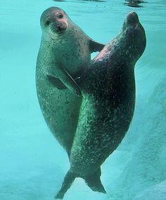 Seal #Hug #love
