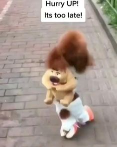 Super Cute Puppies, Super Cute Animals, Cute Funny Animals, Cute Baby Animals, Cute Cats, Animals And Pets, Funny Dog Memes, Funny Animal Videos, Funny Dogs