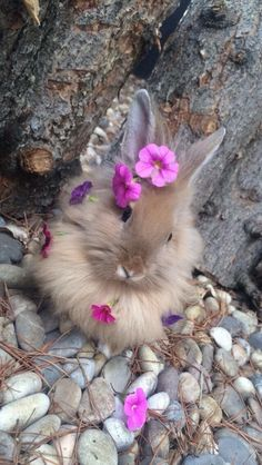 Spring is here (early Spring) Flora Jeanne (Leaf-Lawn) Cute baby bunny care - Baby Care Cute Wild Animals, Baby Animals Super Cute, Cute Little Animals, Cute Funny Animals, Animals Beautiful, Animals And Pets, Cute Baby Bunnies, Cute Babies, Bunny Bunny