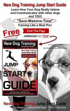 Jump Start Dog Train