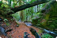 .:. Hiking in Big Sur - Ewoldsen Trail/ Canyon Trail .:.