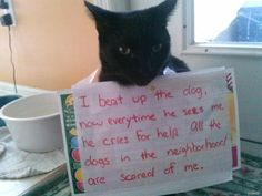 20 Hilarious and All New Cat Shaming Photos You Have To See - World's largest collection of cat memes and other animals Cool Cats, I Love Cats, Cat Shaming, Funny Cats, Funny Animals, Cute Animals, Funny Horses, Crazy Cat Lady, Crazy Cats