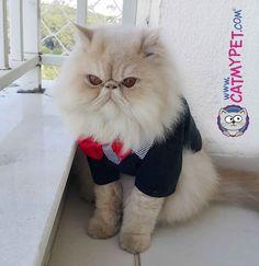 http://www.catmypet.com/terno-cat