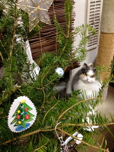 Under the Christmas tree. 2011