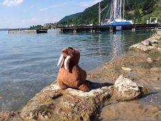 At Lake Attersee, Austria.