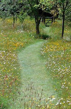 Caminho através do prado de flores selvagens no Great Dixter, Reino Unido. Botões de ouro e margaridas.  Fotografia: http://www.duskyswondersite.com