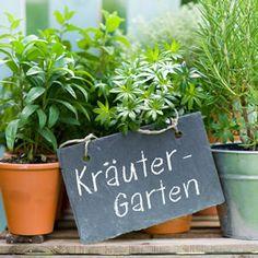 Kräutergarten - Gute Nachbarn ~ Schlechte Nachbarn