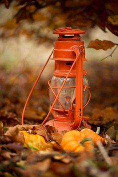 autumn.quenalbertini: Hurricane Lamp